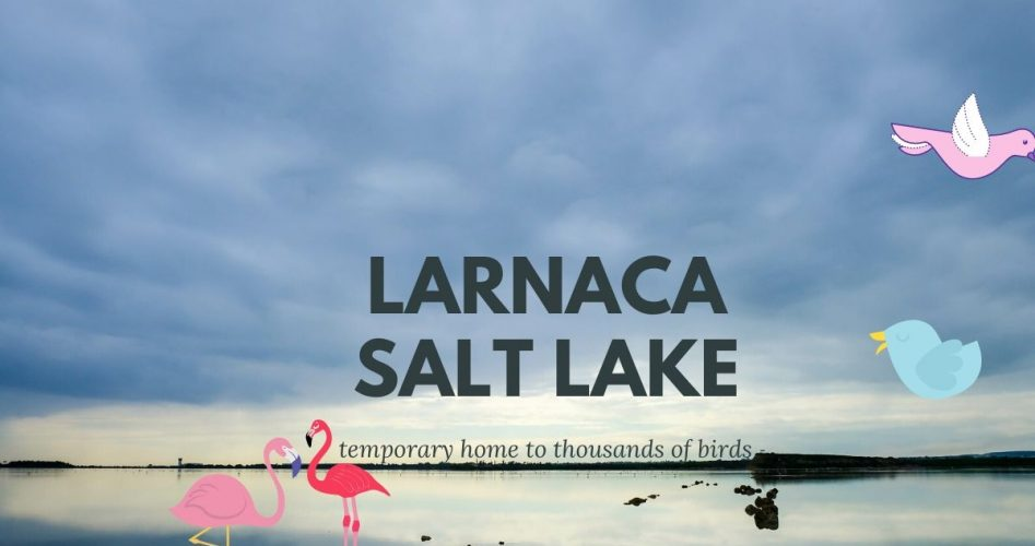 salt_lake_canva_final