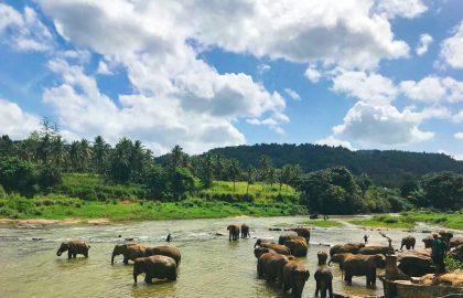 v2_srilanka